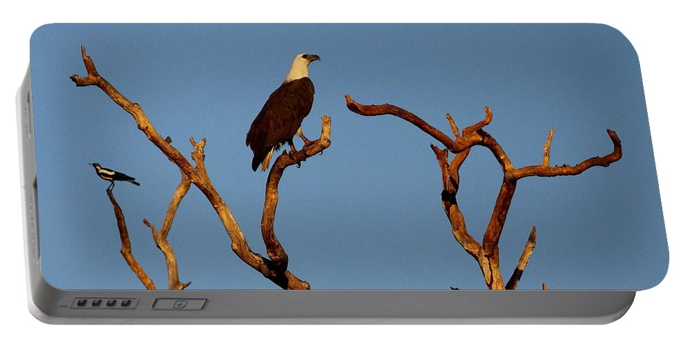 Sea Portable Battery Charger featuring the photograph Sea-eagle And The Peewee by Bruce J Robinson
