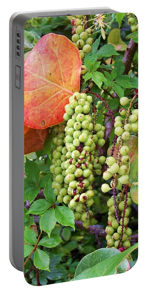 Sea Grapes Portable Battery Charger featuring the photograph Sea Grapes And Poison Ivy by Chuck Hicks