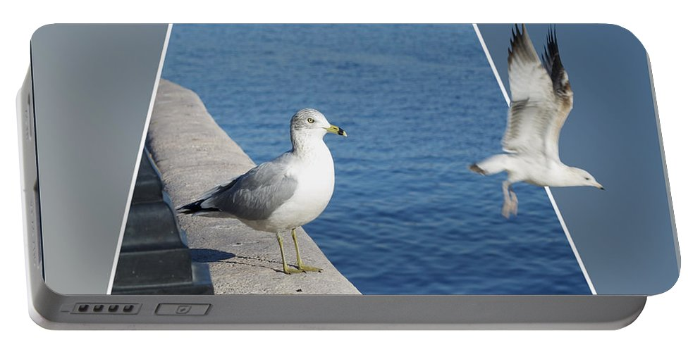 Seagull Portable Battery Charger featuring the photograph Sea Gull Away Out Of Bounds by Thomas Woolworth