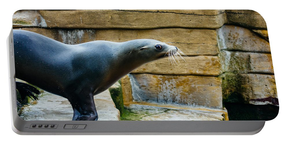 Photograph Portable Battery Charger featuring the photograph Sea Lion Side View by Pati Photography