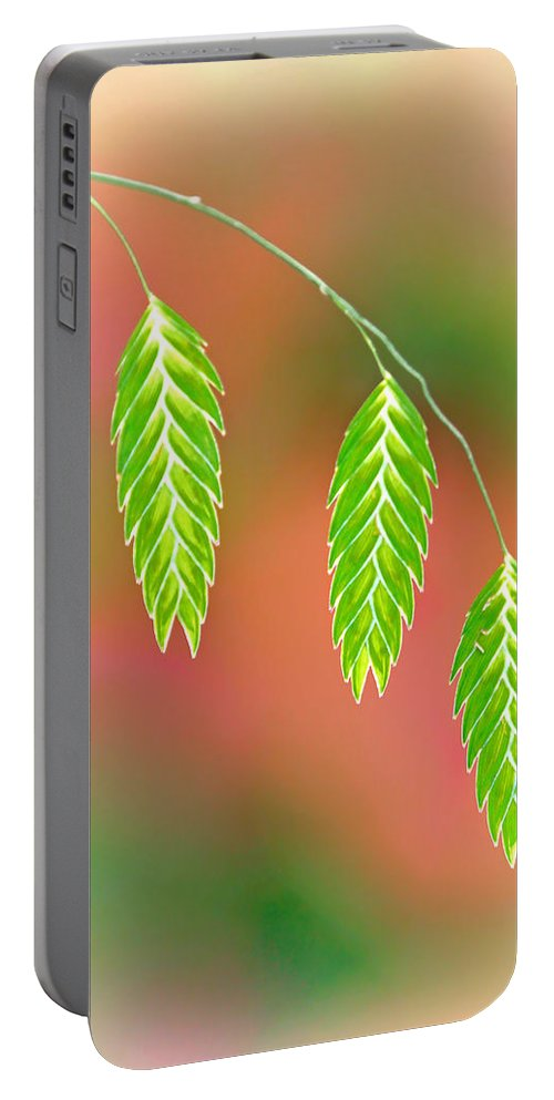 Sea Oats Grass Portable Battery Charger featuring the photograph Sea Oats Grass Seedheads by Carolyn Derstine