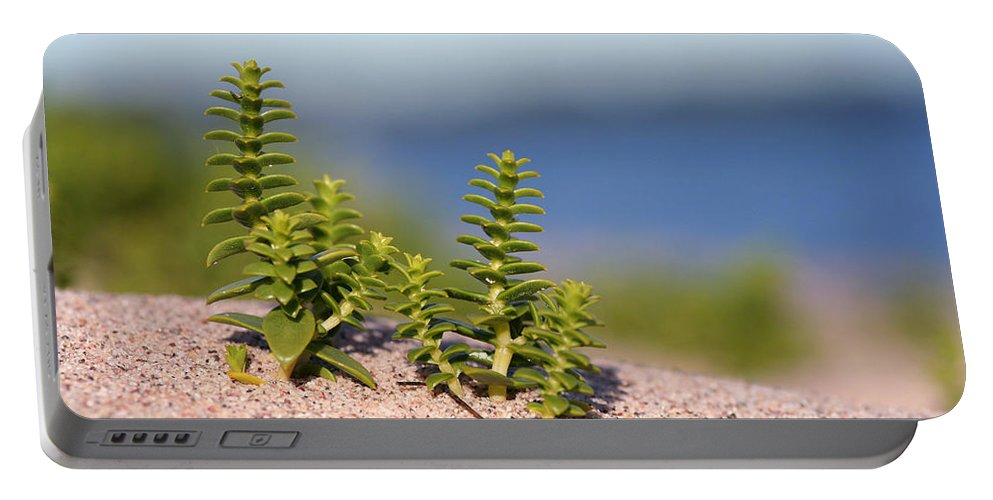 Alvinge Portable Battery Charger featuring the photograph Sea Sandwort by Dreamland Media