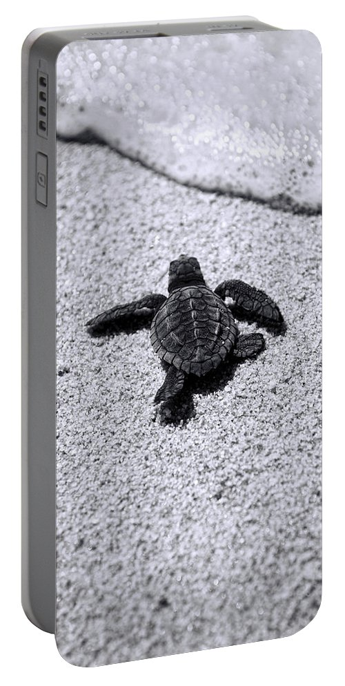 Baby Loggerhead Portable Battery Charger featuring the photograph Sea Turtle by Sebastian Musial