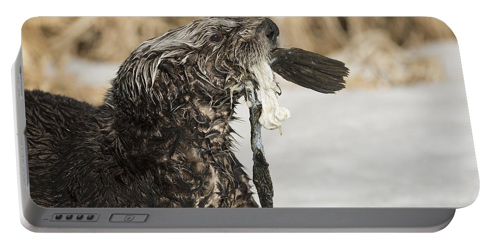 Otter Portable Battery Charger featuring the photograph Seafood by Ted Raynor