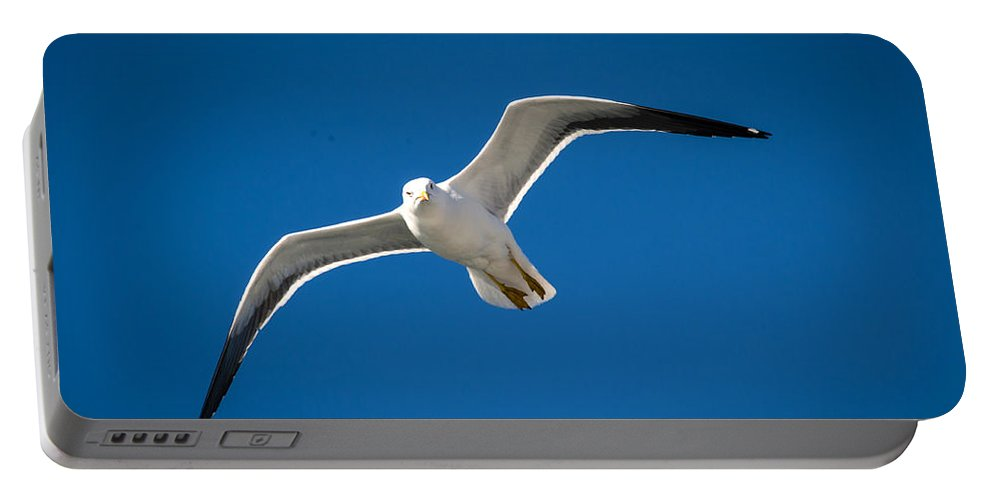 Seagull Portable Battery Charger featuring the photograph Seagull by Bill Howard