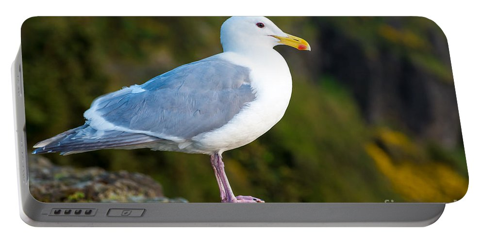 Seagull Portable Battery Charger featuring the photograph Seagull Heceta Head - Oregon by Gary Whitton