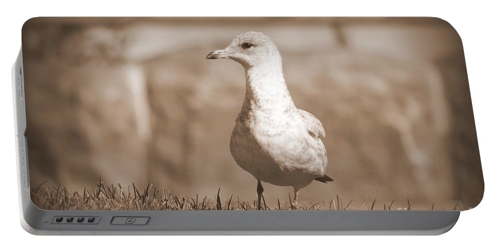 Seagulls Portable Battery Charger featuring the photograph Seagull In Sephia by Jennifer E Doll