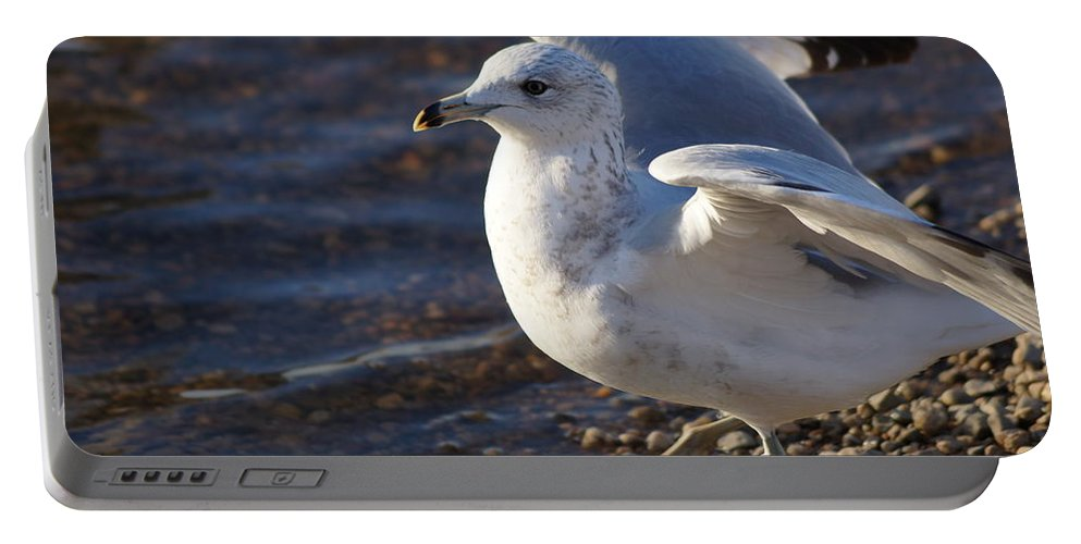 Seagull Portable Battery Charger featuring the photograph Seagull by Jasmin Hrnjic