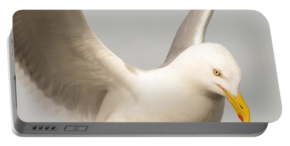 Seagull Portable Battery Charger featuring the photograph Seagull Landing by Steven Natanson