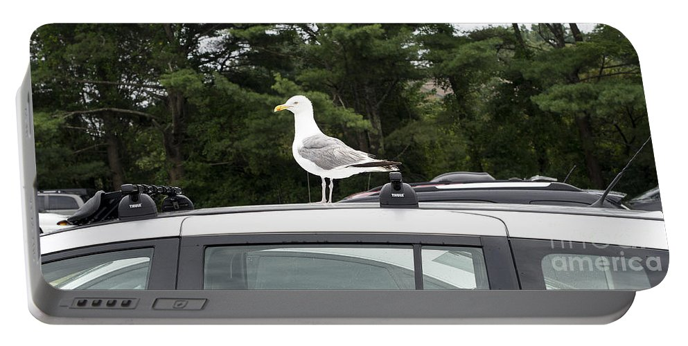 Maine Portable Battery Charger featuring the photograph Seagull On Car by Steven Ralser