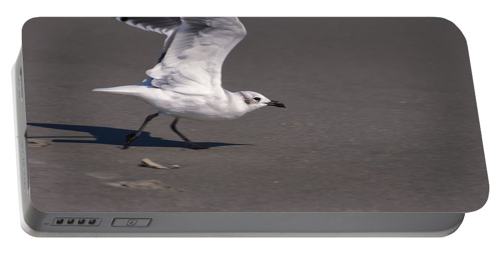 Bird Portable Battery Charger featuring the photograph Seagull Preparing To Fly by Chris Flees