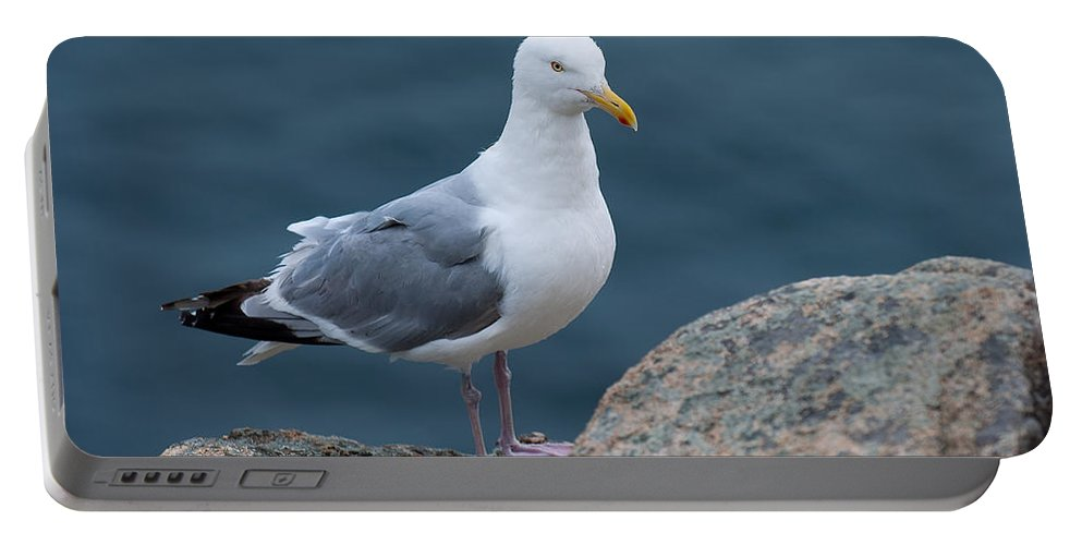 Acadia National Park Portable Battery Charger featuring the photograph Seagull by Sebastian Musial