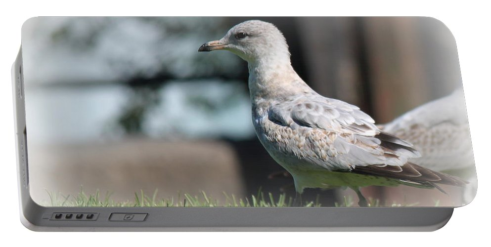 Seagulls Portable Battery Charger featuring the photograph Seagulls 1 by Jennifer E Doll