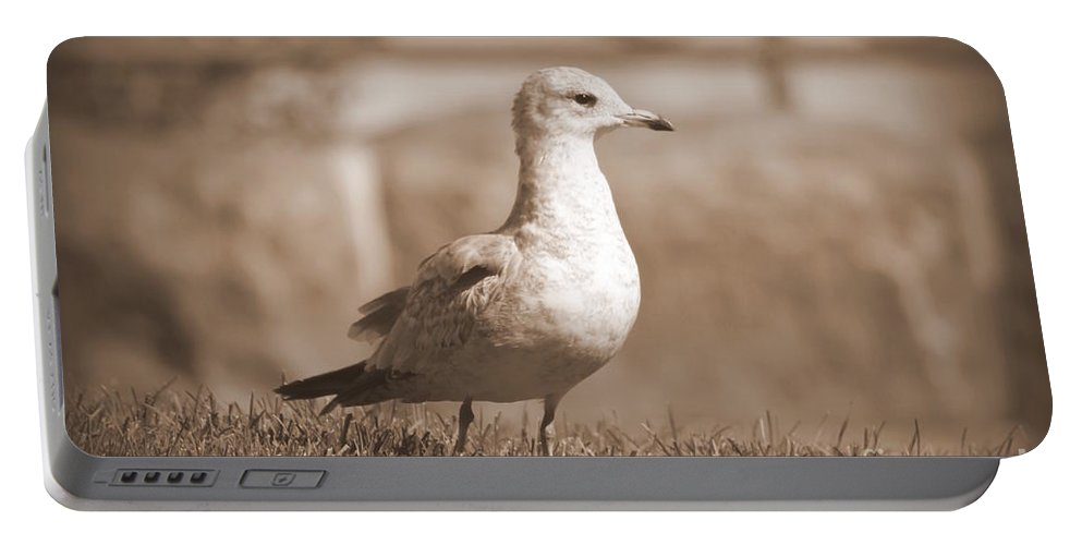 Seagulls Portable Battery Charger featuring the photograph Seagulls 2 by Jennifer E Doll