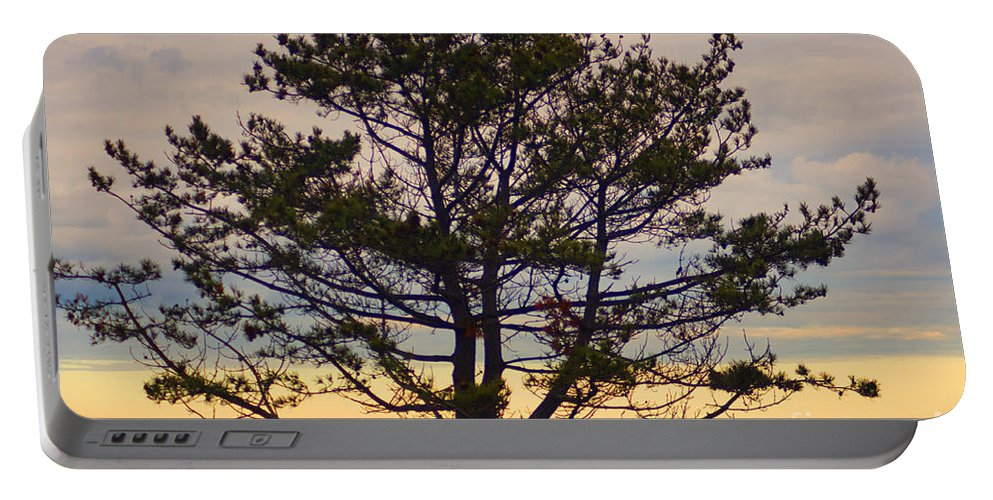 Pine Portable Battery Charger featuring the photograph Seaside Pine by Ray Konopaske