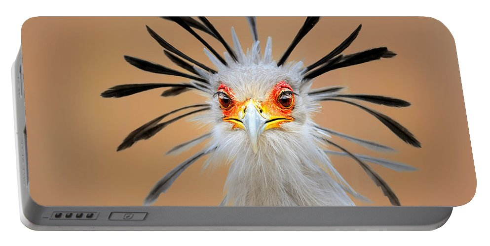 Bird Portable Battery Charger featuring the photograph Secretary bird portrait close-up head shot by Johan Swanepoel