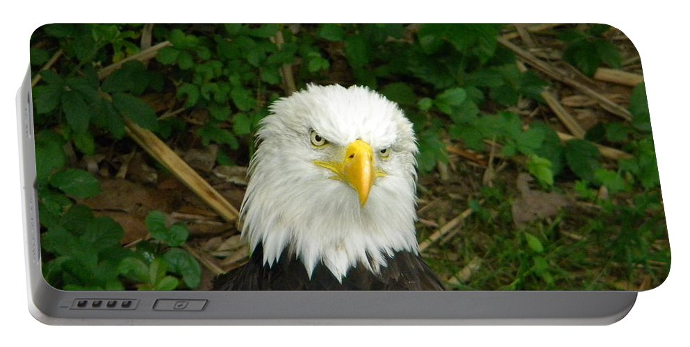 Eagle Portable Battery Charger featuring the photograph Serious Eagle Eye by Nathanael Smith
