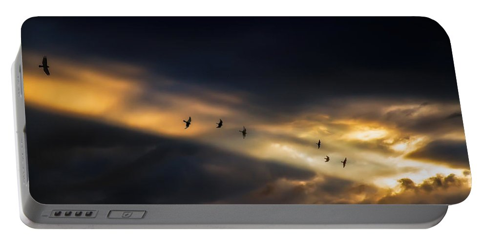 Birds Portable Battery Charger featuring the photograph Seven Bird Vision by Bob Orsillo