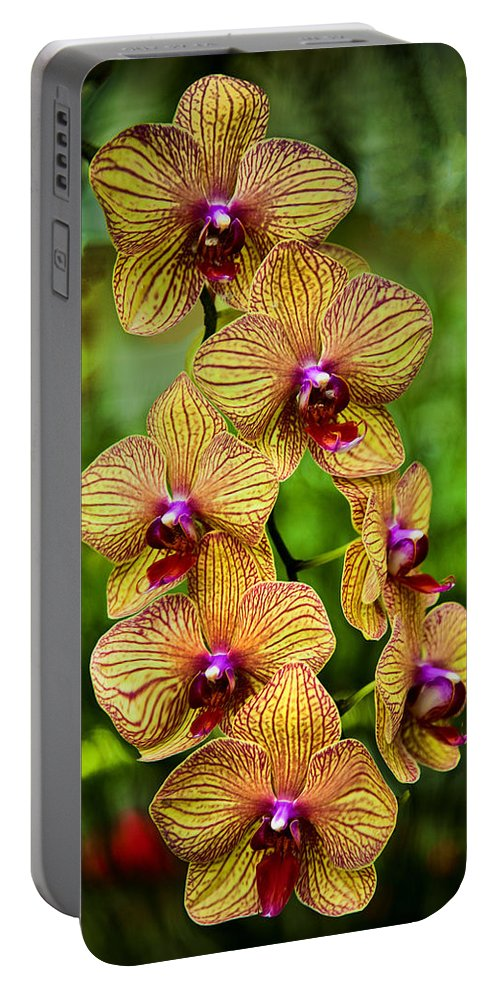 Orchids Portable Battery Charger featuring the photograph Seven Blooms by Diana Powell