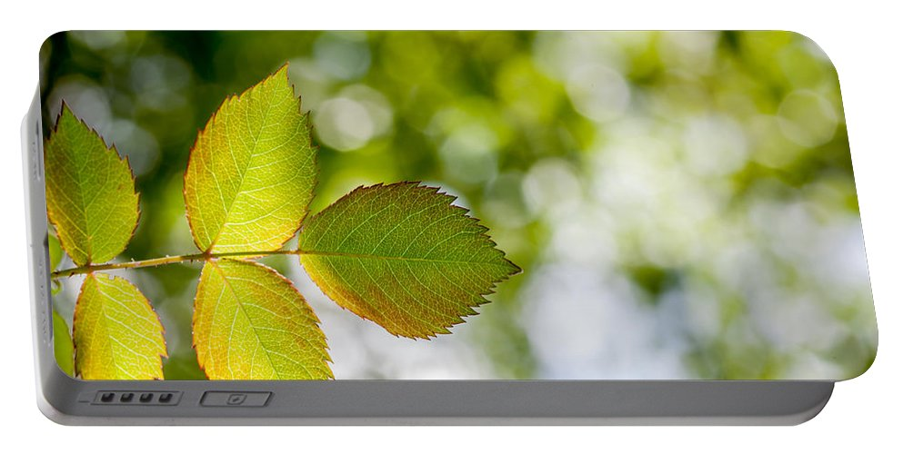 Bokeh Portable Battery Charger featuring the photograph Shades Of Green by Aaron Aldrich