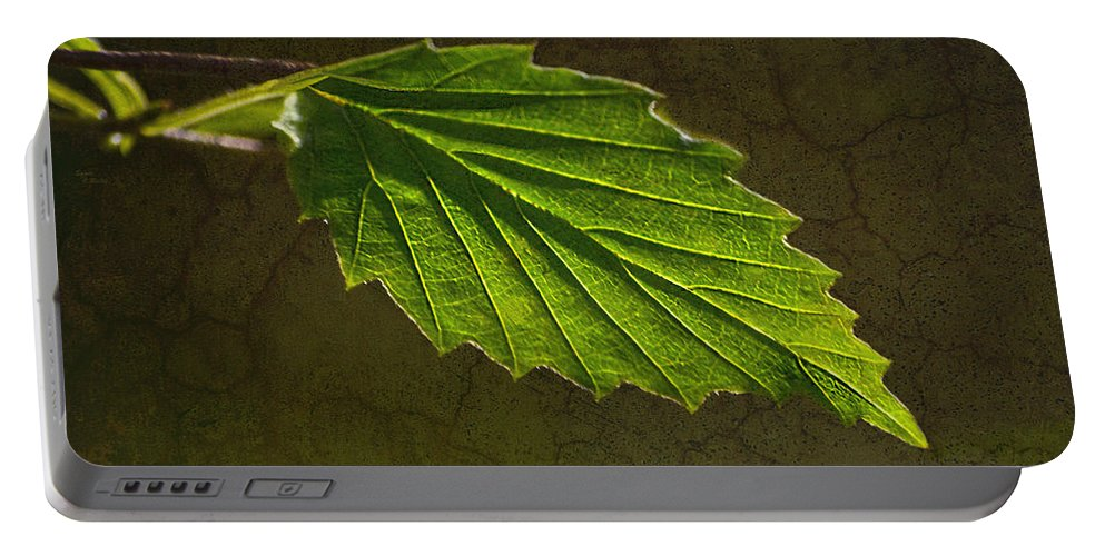 Leaf Portable Battery Charger featuring the photograph Shadows And Light Of The Leaf by Sandi OReilly