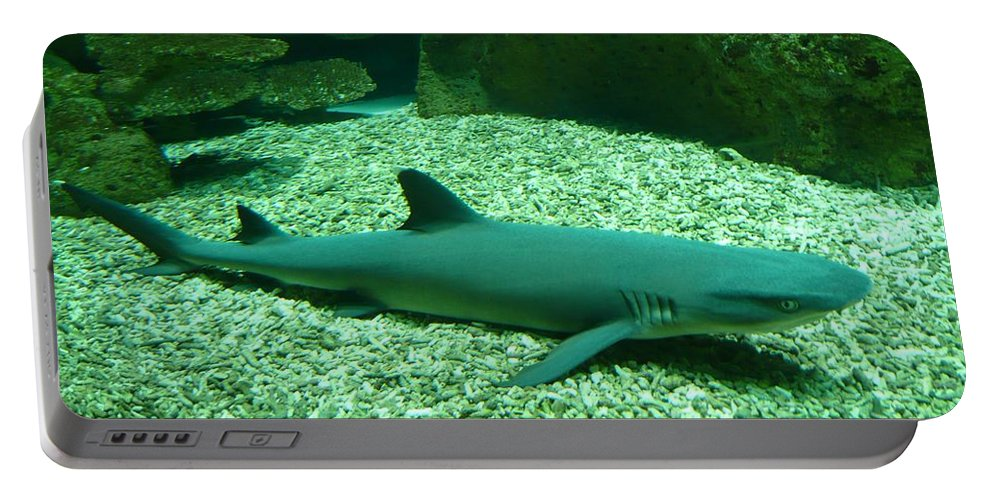 Shark Portable Battery Charger featuring the photograph Shark by FL collection