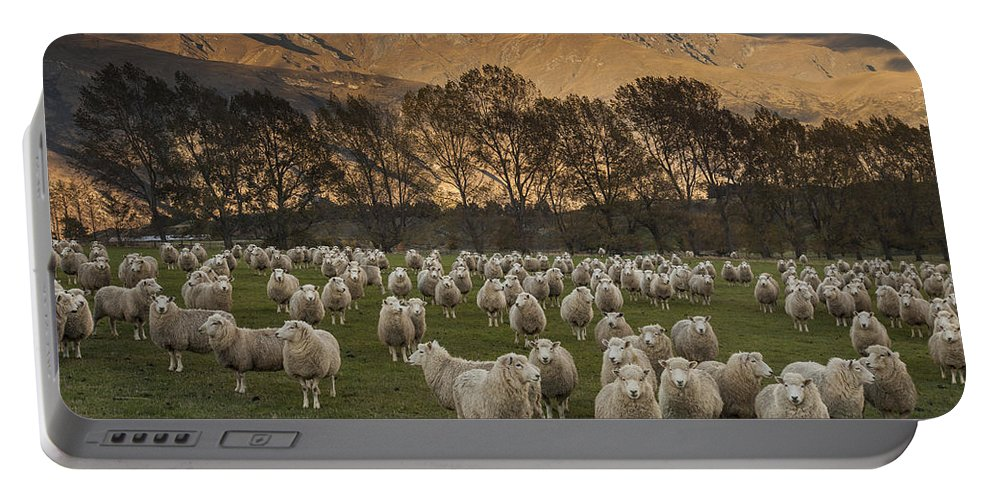 colin Monteath Hedgehog House Portable Battery Charger featuring the photograph Sheep Flock At Dawn Arrowtown Otago New by Colin Monteath, Hedgehog House