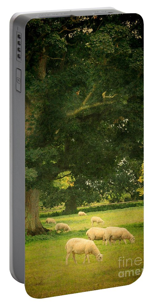 Sheep Portable Battery Charger featuring the photograph Sheep Grazing by Jill Battaglia