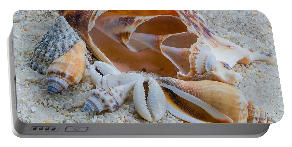 Seashell Portable Battery Charger featuring the photograph Shell Collectors Dream by Randy Walton