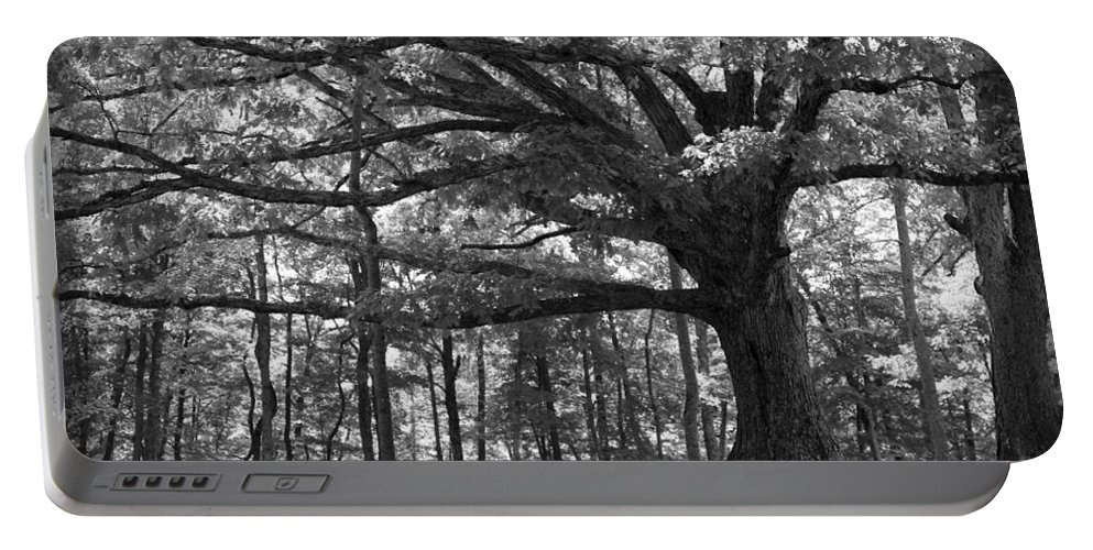 Tree Portable Battery Charger featuring the photograph Shelter Me by Shari Jardina