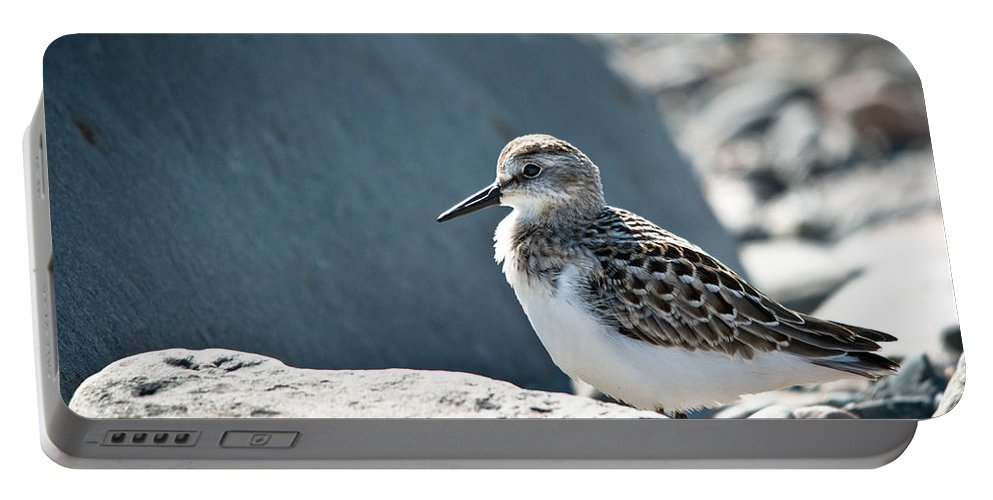 Portable Battery Charger featuring the photograph Shorebird by Cheryl Baxter