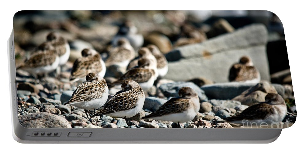 Portable Battery Charger featuring the photograph Shorebird Rest Time by Cheryl Baxter
