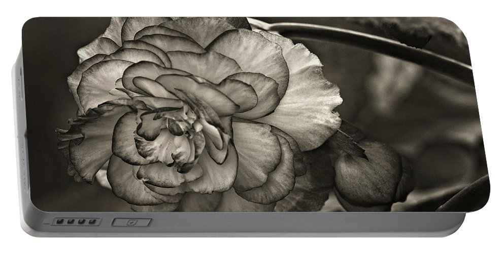 Begonia Portable Battery Charger featuring the photograph Showgirl Monochrome by Steve Harrington