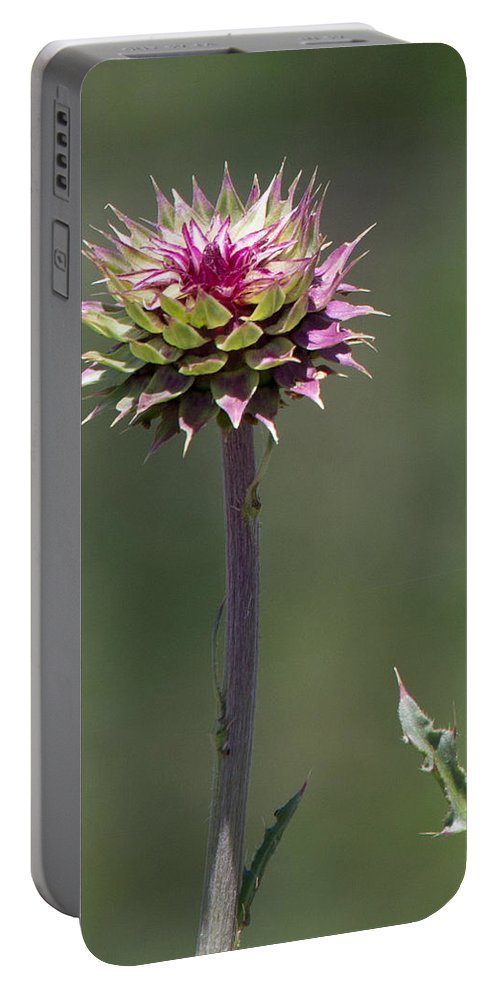 Botanical Portable Battery Charger featuring the photograph Shrouded Beauty by John Daly
