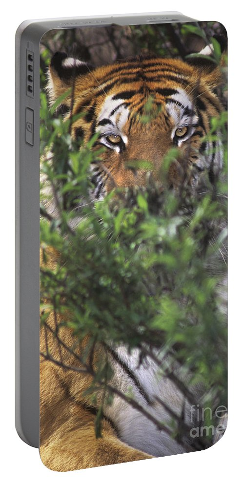 Siberian Tiger Portable Battery Charger featuring the photograph Siberian Tiger In Hiding Wildlife Rescue by Dave Welling