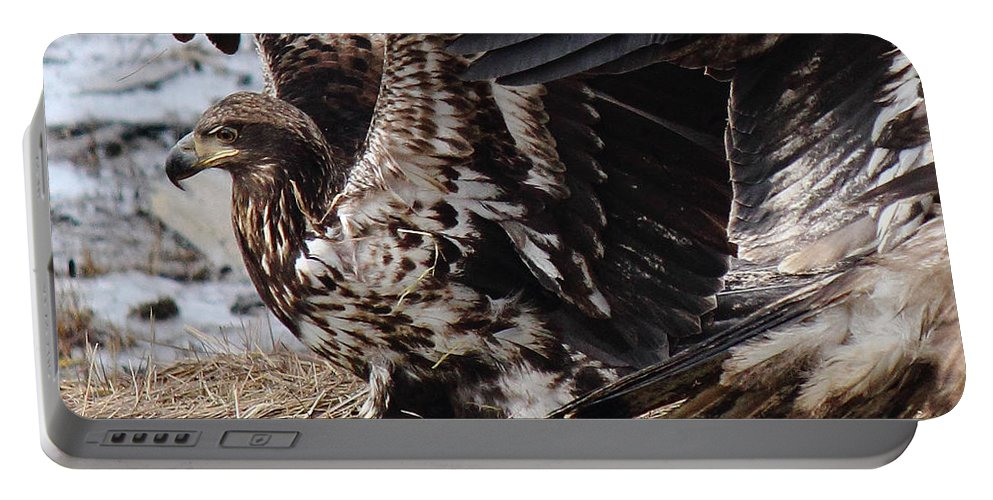 Eagle Portable Battery Charger featuring the photograph Siblings by Randy Hall