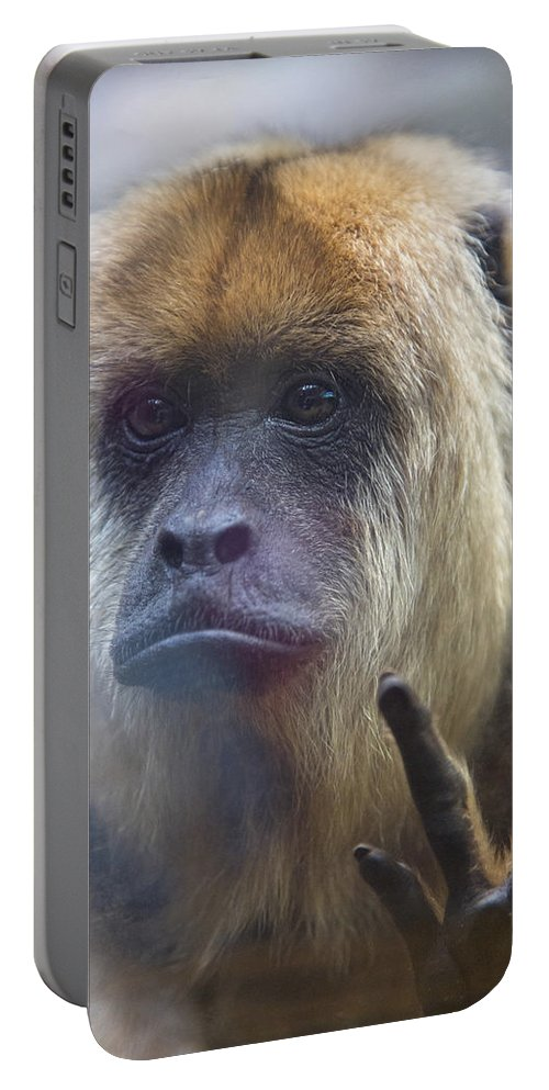 Monkey Portable Battery Charger featuring the photograph Sign Language by Karol Livote