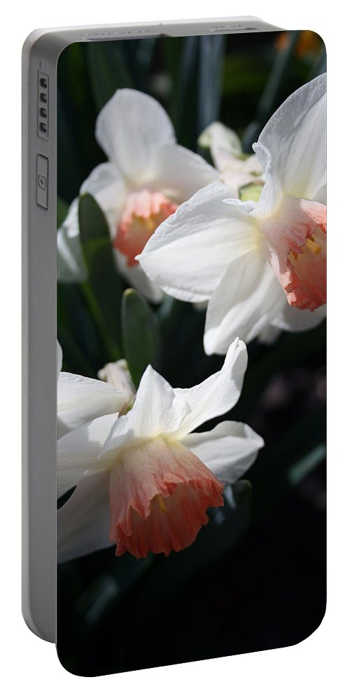 Flowers Portable Battery Charger featuring the photograph Signs Of Spring by Kay Novy