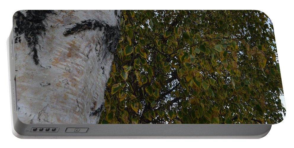Betula Pendula Portable Battery Charger featuring the photograph Silver Birch by Brian Boyle