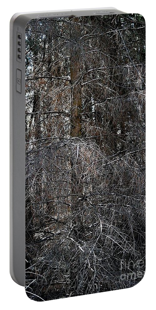 Cedar Tree Portable Battery Charger featuring the photograph Silver Cedar by Joseph Yarbrough