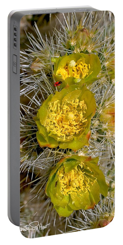 Nature. Silver Cholla Portable Battery Charger featuring the photograph Silver Cholla Cactus by David Salter