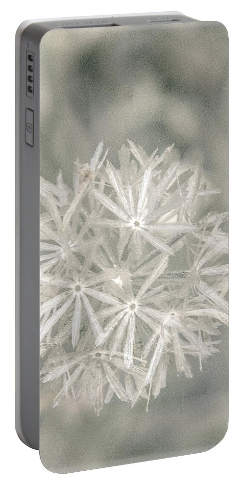 Asteraceae Portable Battery Charger featuring the photograph Silver Puff by Susan Eileen Evans
