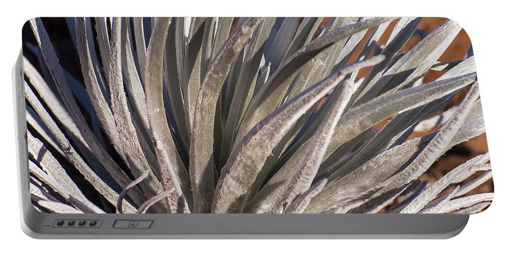 Silversword Plant Plants Leaf Leaves Haleakala National Park Volcano Area Maui Hawaii Parks Nature Greensward Succulent Succulents Portable Battery Charger featuring the photograph Silversword Detail by Bob Phillips