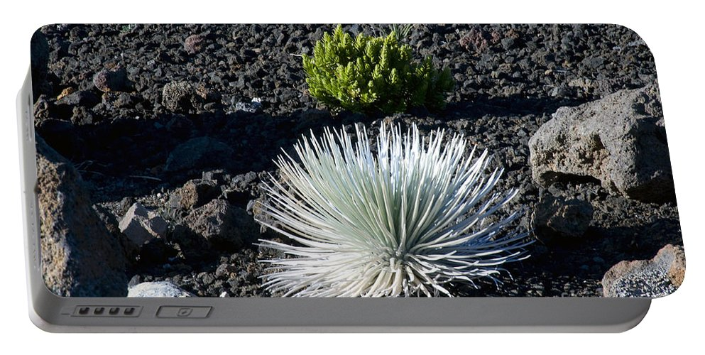 Silversword Plant Plants Leaf Leaves Volcanic Rock Rocks Haleakala National Park Volcano Area Maui Hawaii Parks Nature Greensward Succulent Succulents Portable Battery Charger featuring the photograph Silversword Plant by Bob Phillips