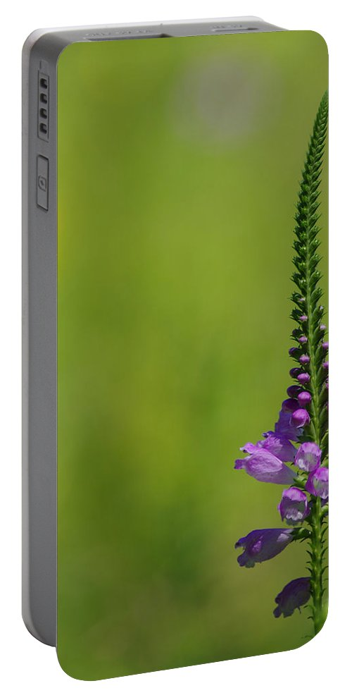 Purple Portable Battery Charger featuring the photograph Simplicity by Jenny Gandert