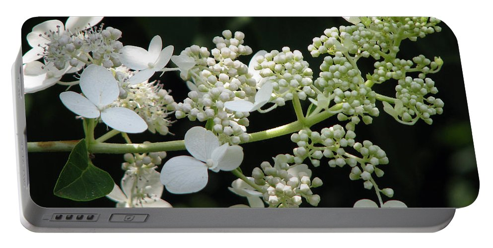 Hydrangea Portable Battery Charger featuring the photograph Simply by Amanda Barcon