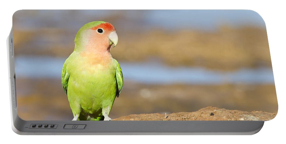 Rosy Face Love Bird Portable Battery Charger featuring the photograph Single Love Bird Seeks Same by Bryan Keil