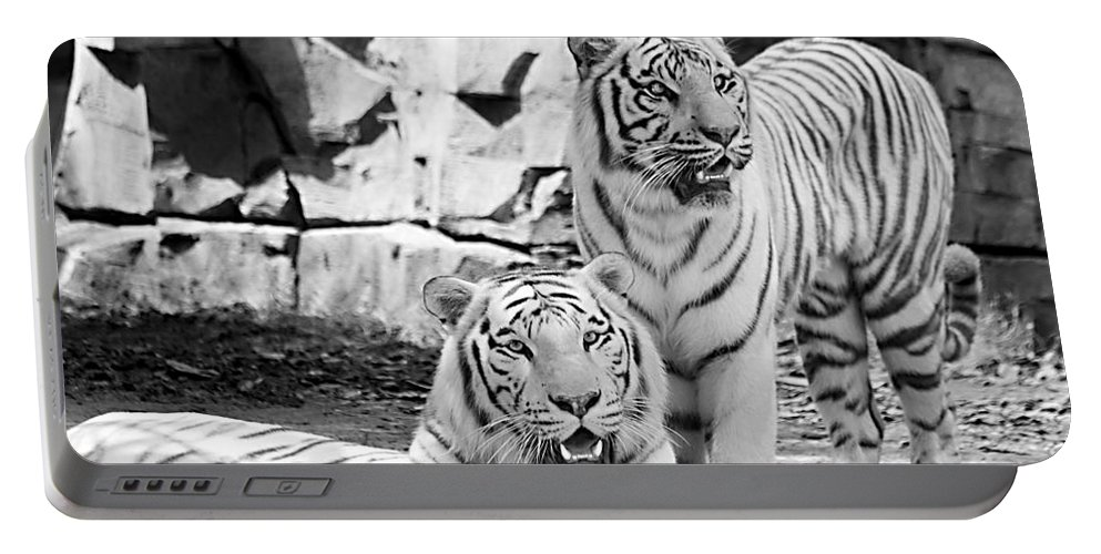 Tigers Portable Battery Charger featuring the photograph Sisters Black And White by Ken Frischkorn