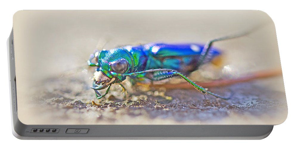 Beetle Portable Battery Charger featuring the photograph Six-spotted Tiger Beetle - Cicindela Sexguttata by Mother Nature