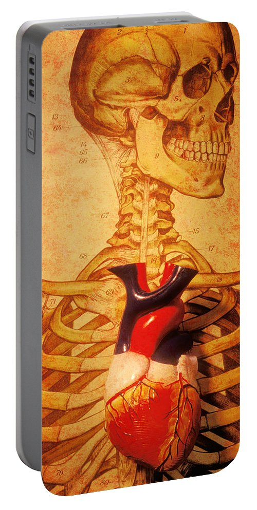 Skeleton Heart Model Pumping Muscle Ribs Ribcage Portable Battery Charger featuring the photograph Skeleton And Heart Model by Garry Gay